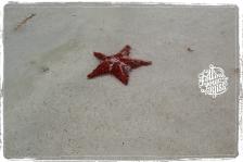Follow your Bliss - seastar