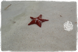 Follow your Bliss - seastar